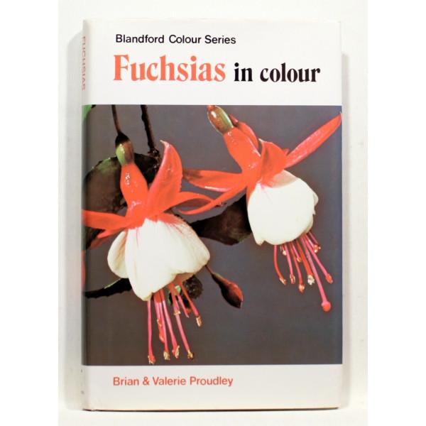 Fuchsias in Colour